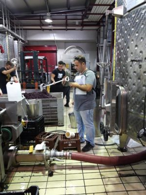 Recording every step in the wine production. Photo: Maria Doula