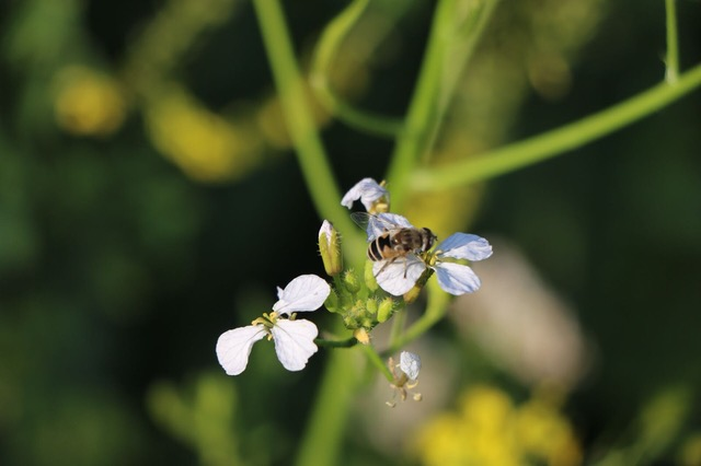 Pollination and natural pest controls are Functional Agrobiodiversity possibilities that offer solutions to drastically reduce the dependence on chemical inputs. Photo: Fabulous Farmers
